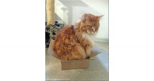 caixa grande para o gato