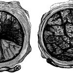 O que é a placenta, para que serve e como funciona: um guia completo!