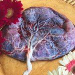 A placenta e os seus mistérios