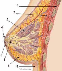 Hormônios do parto