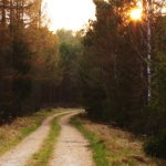 O caminho ensolarado